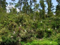White Heron Sanctuary Tours