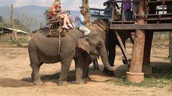 Karens Elephant Tours