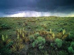 Comanche National Grassland