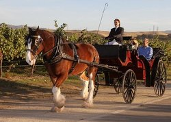 Livermore Wine Carriage