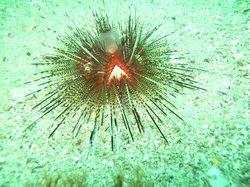 Scuba Diving Acapulco