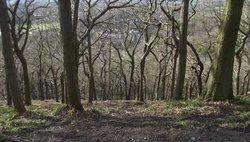 Ladies Spring Wood