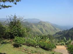 View from veranda - Ambiente