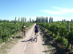 Maipu Aventuras Wine Tour in Bike