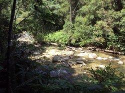 Rain Forest & Self Awareness Tour