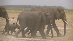 F. King Tours and Safaris - Day Tours