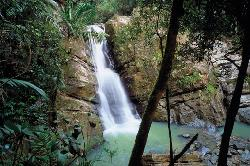 El Yunque Rainforest, Rio Grande (39776000)