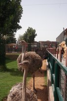 Emirates Park Zoo