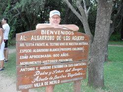 Algarrobo de los Aguero (Algarrobo Abuelo)