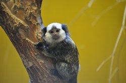 Zoo Sosto