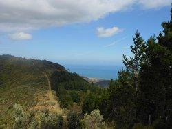 TrueNZ Guides Coastal Views Horse Rides Wainuiomata