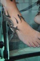 Velvet Feet Fish Spa