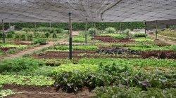 Los Ficus Casa Hacienda