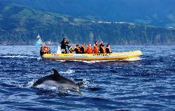 ‪Azores Whale Watching Terra Azul‬