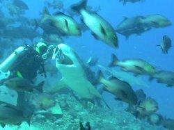 Aqua Blue Dive & Snorkel