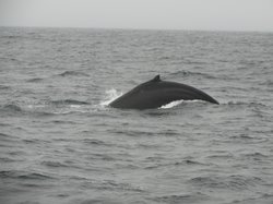 SF Bay Whale Watching