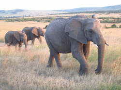 Explorer Kenya - Safari Day Tours