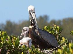 Sarasota Bay Explorers