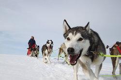 Geilo Husky Hundekjøring Dagsturer