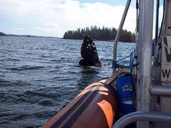 Subtidal Adventures