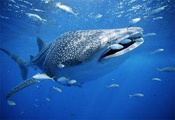 Kings Ningaloo Reef Tours Exmouth