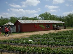 Sweet Berry Farm
