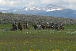 Yellowstone Horses - Eagle Ridge Ranch