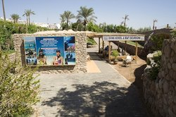 Dive In Sharm