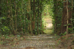 Monteverde Wildlife Refuge