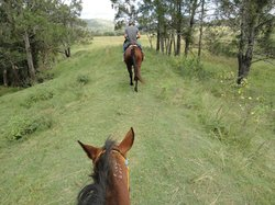 Gumnuts Farm and Horseriding Resort