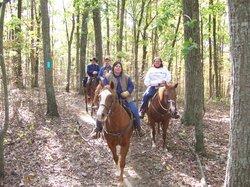 D Bar K Horse Camp