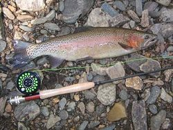 Turning Stones Fly Fishing, LLC Day Tours