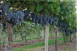 Holy-Field Vineyard & Winery