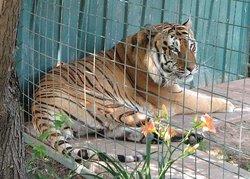 Brit Spaugh Zoo