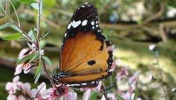 Butterfly World & Gardens