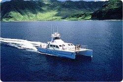 Ocean Joy Cruises