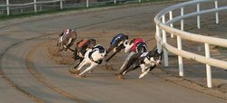 Peterborough Greyhound Stadium