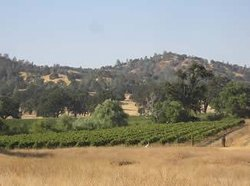 Pozo Valley Winery