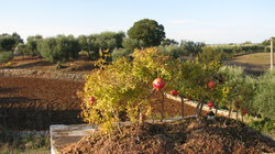 I Giardini di Pomona