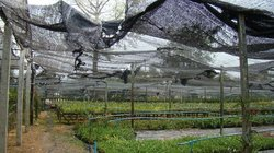 Doi Saket Orchid Farm