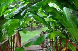 Jessamine Eden Botanic Garden