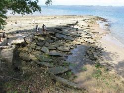 化石贝壳海滩