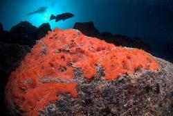 Centro de buceo Punta Amanay