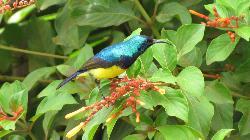 Sunbird on the garden