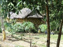 The organic farm.