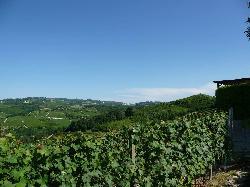 Boroli Vini