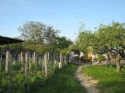 Weinbau Zawodsky