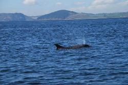 Dolphin Trips Avoch