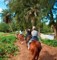 ‪Turtle Bay Resort Horse Riding‬