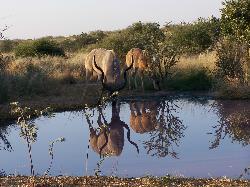Kudu all'abbeverata